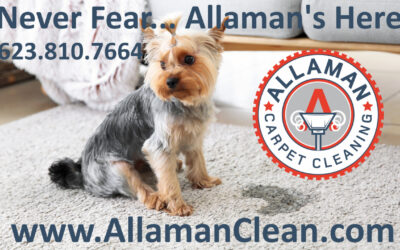 Pet Stains on Carpet, Tile, Grout & Upholstery